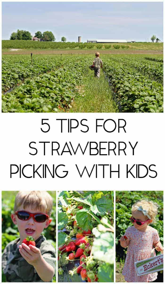 5 tips for strawberry picking with kids