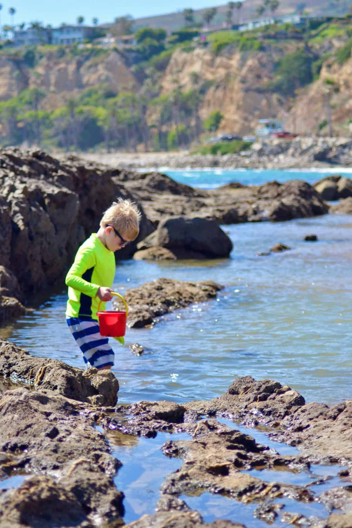 exploring tide pools with kids in california