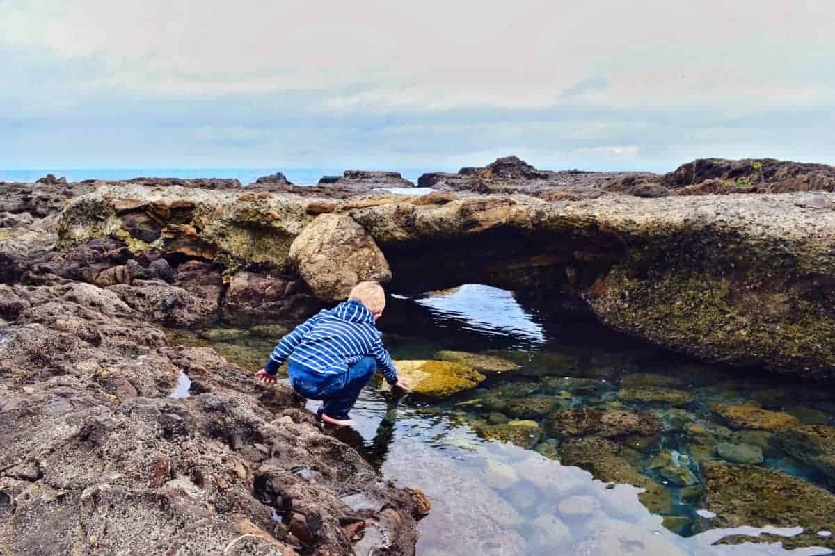 Exploring California Tidepools with kids