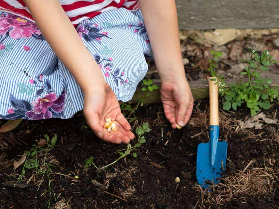 growing a vegetable garden with kids