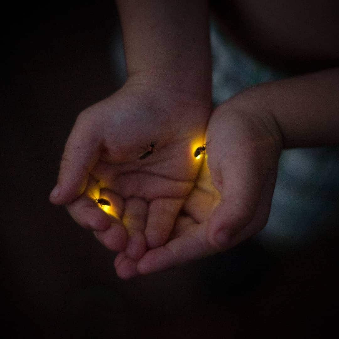 catching fireflies with kids