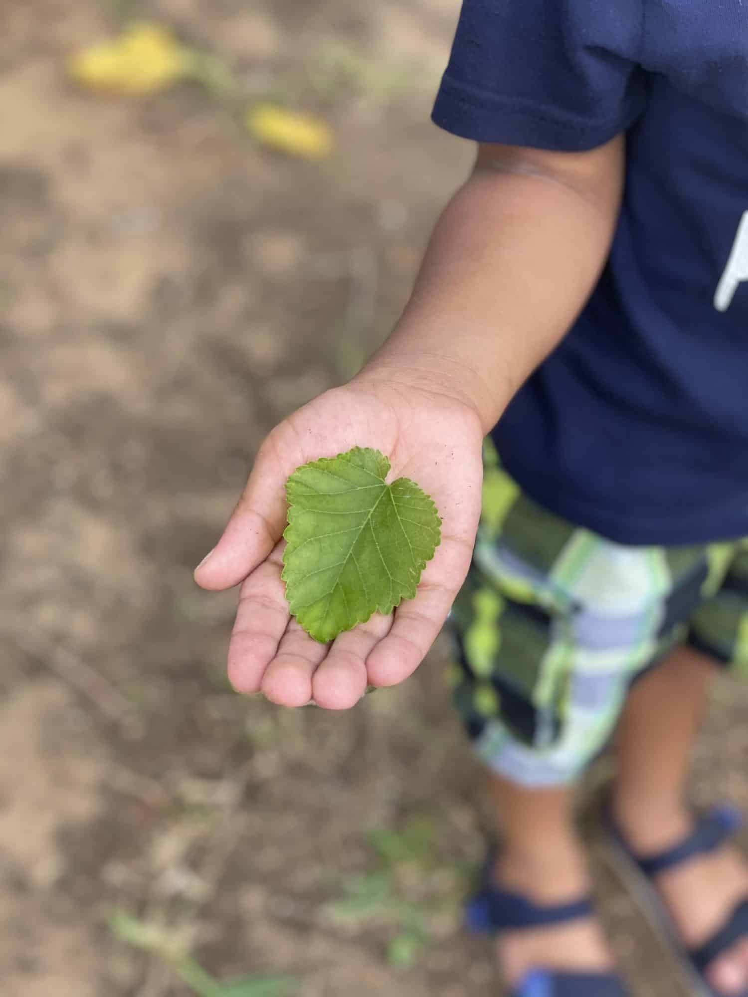Learning About Leaves with Kids - make nature art from items in your backyard