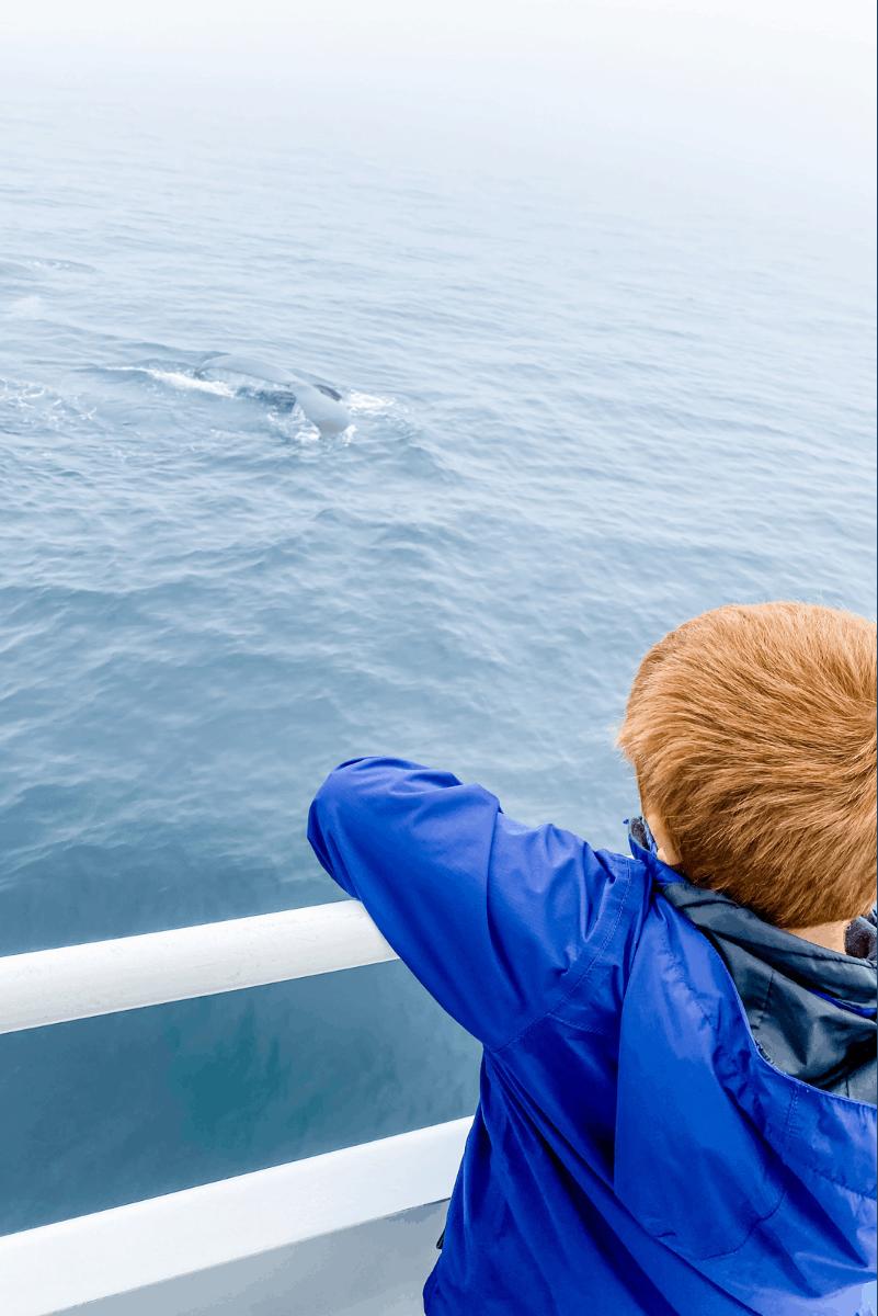 whale watch boat adventure ocean excursion cape cod
